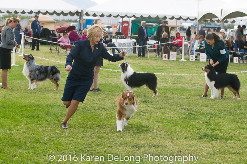 20161120_Greater Sierra Vista Kennel Club_Aussies-189