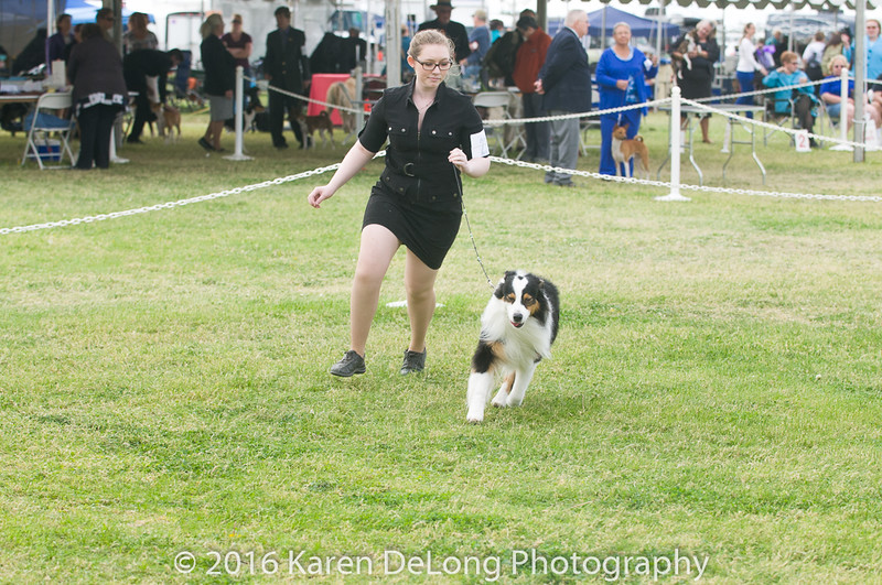 20161120_Greater Sierra Vista Kennel Club_Aussies-111