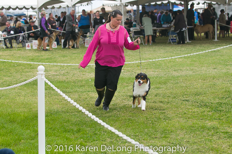20161120_Greater Sierra Vista Kennel Club_Aussies-25