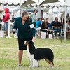 20161120_Greater Sierra Vista Kennel Club_Aussies-219