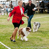20161120_Greater Sierra Vista Kennel Club_Aussies-364