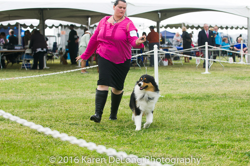 20161120_Greater Sierra Vista Kennel Club_Aussies-102