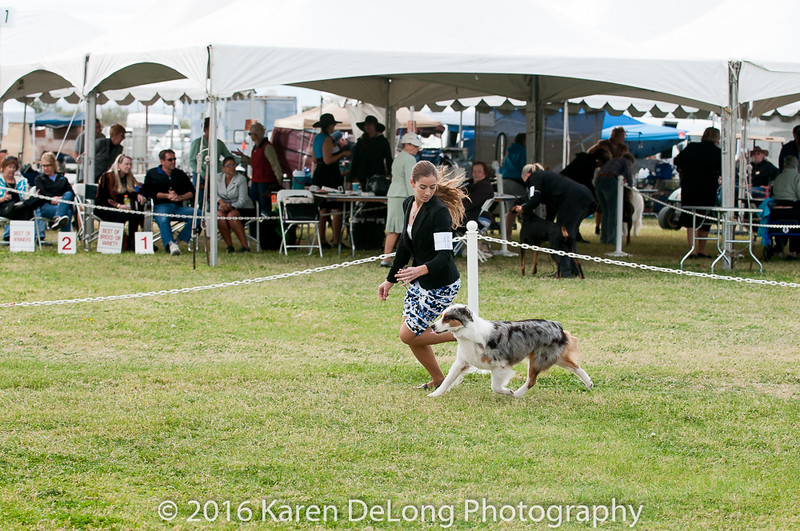 20161120_Greater Sierra Vista Kennel Club_Aussies-297