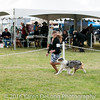 20161120_Greater Sierra Vista Kennel Club_Aussies-297