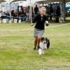 20161120_Greater Sierra Vista Kennel Club_Aussies-353
