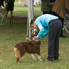 20161120_Greater Sierra Vista Kennel Club_Aussies-246
