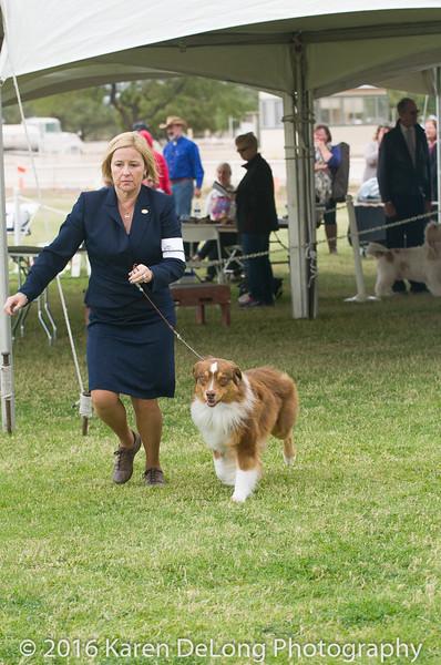 20161120_Greater Sierra Vista Kennel Club_Aussies-72