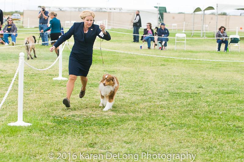 20161120_Greater Sierra Vista Kennel Club_Aussies-77