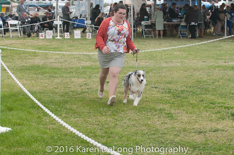 20161120_Greater Sierra Vista Kennel Club_Aussies-40