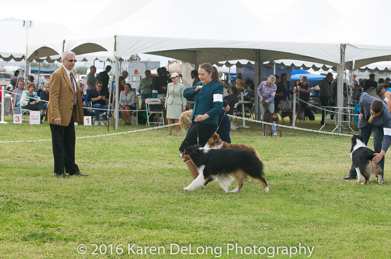 20161120_Greater Sierra Vista Kennel Club_Aussies-186