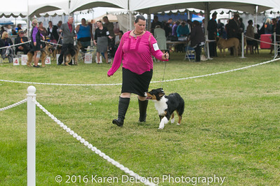 20161120_Greater Sierra Vista Kennel Club_Aussies-23