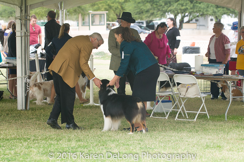20161120_Greater Sierra Vista Kennel Club_Aussies-93