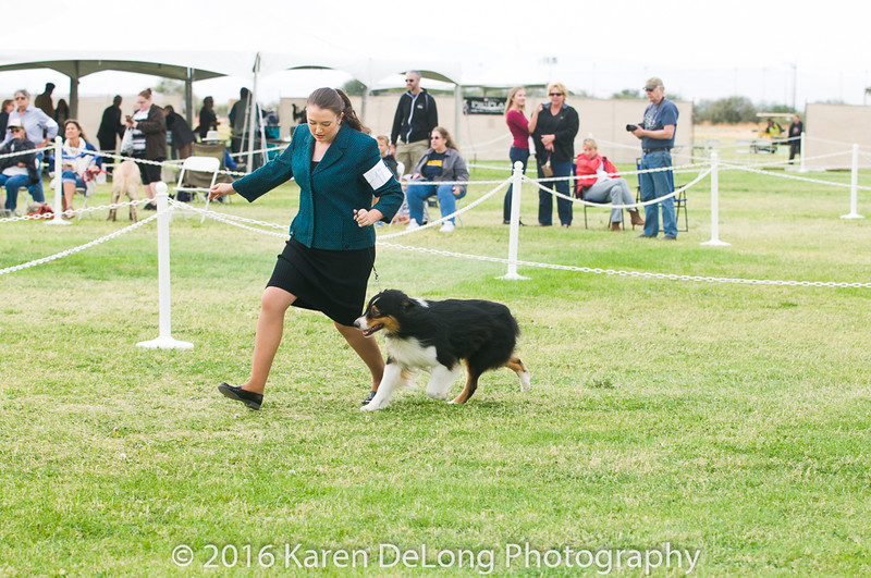 20161120_Greater Sierra Vista Kennel Club_Aussies-90