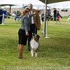 20161120_Greater Sierra Vista Kennel Club_Aussies-143