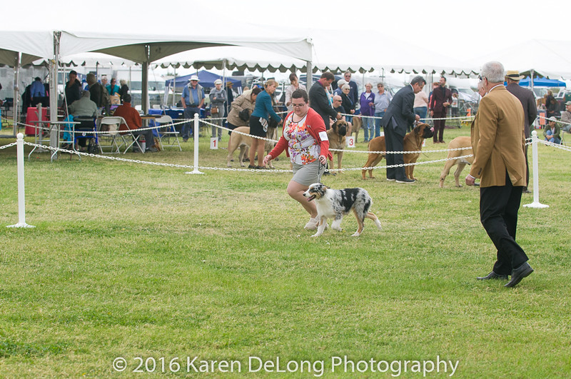 20161120_Greater Sierra Vista Kennel Club_Aussies-35