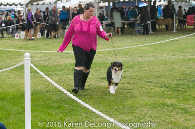 20161120_Greater Sierra Vista Kennel Club_Aussies-26