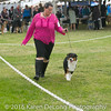 20161120_Greater Sierra Vista Kennel Club_Aussies-26