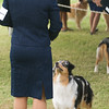 20161120_Greater Sierra Vista Kennel Club_Aussies-289