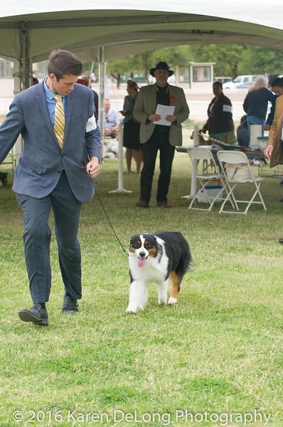 20161120_Greater Sierra Vista Kennel Club_Aussies-57