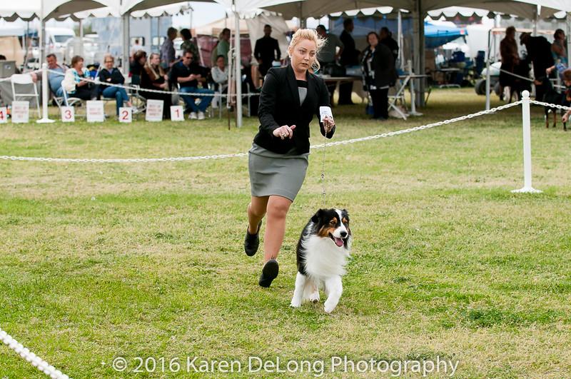 20161120_Greater Sierra Vista Kennel Club_Aussies-354