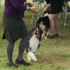 20161120_Greater Sierra Vista Kennel Club_Aussies-253