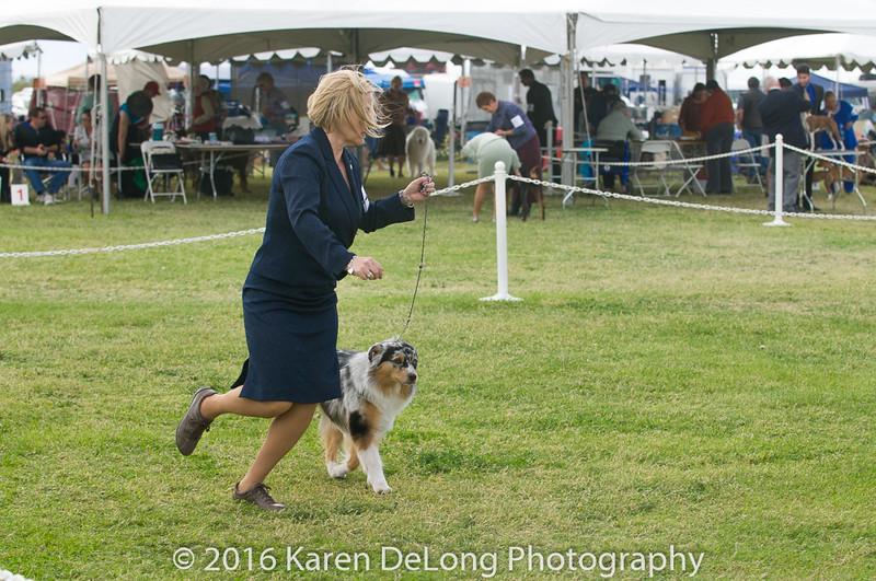 20161120_Greater Sierra Vista Kennel Club_Aussies-283