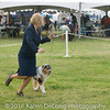 20161120_Greater Sierra Vista Kennel Club_Aussies-283