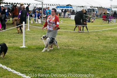 20161120_Greater Sierra Vista Kennel Club_Aussies-10