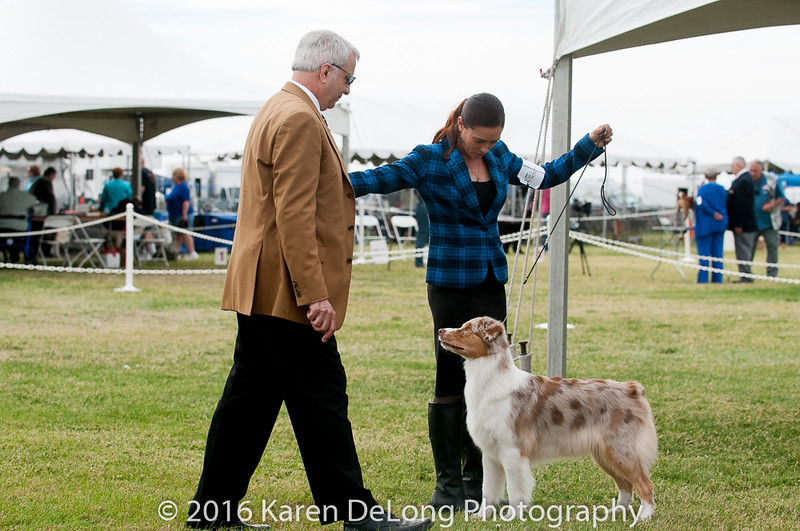 20161120_Greater Sierra Vista Kennel Club_Aussies-313