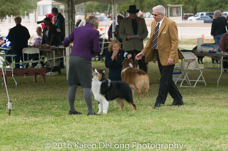 20161120_Greater Sierra Vista Kennel Club_Aussies-83