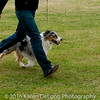 20161120_Greater Sierra Vista Kennel Club_Aussies-378