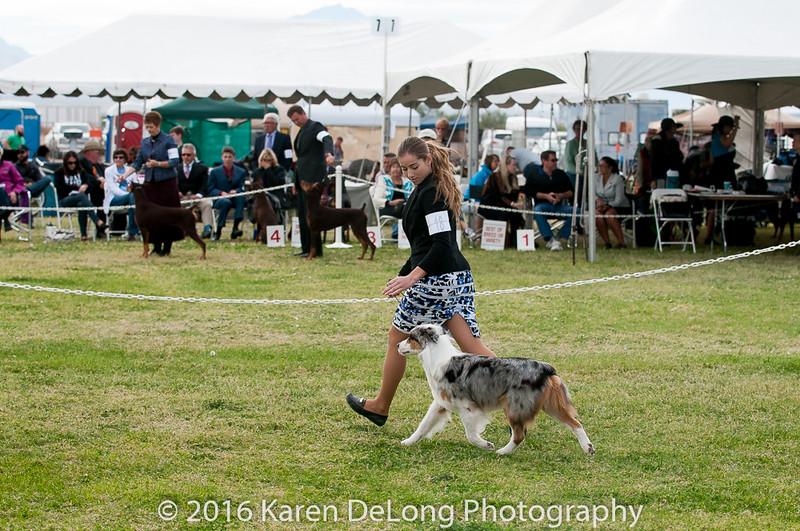 20161120_Greater Sierra Vista Kennel Club_Aussies-293