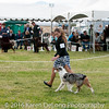 20161120_Greater Sierra Vista Kennel Club_Aussies-293