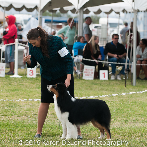 20161120_Greater Sierra Vista Kennel Club_Aussies-220