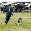 20161120_Greater Sierra Vista Kennel Club_Aussies-362