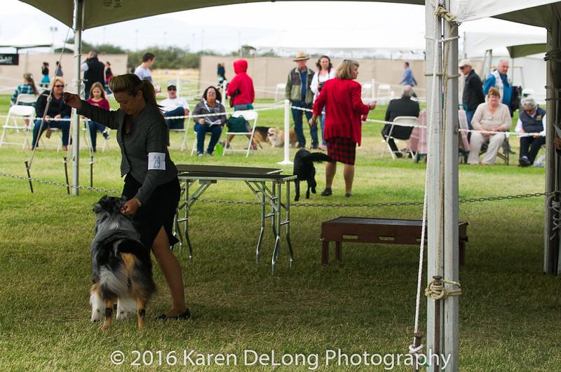20161120_Greater Sierra Vista Kennel Club_Aussies-131