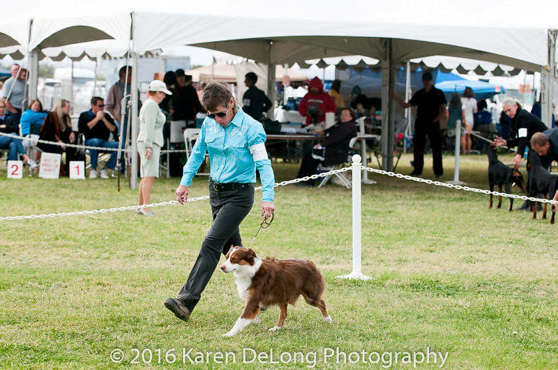 20161120_Greater Sierra Vista Kennel Club_Aussies-236