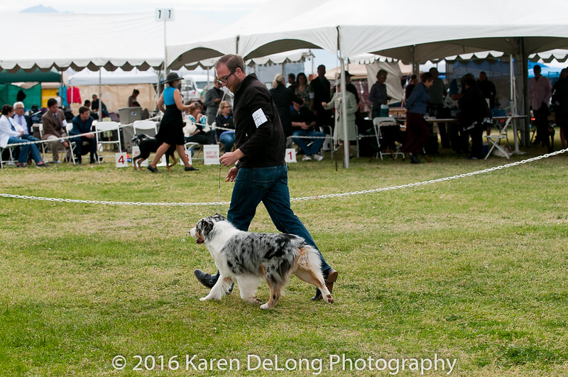20161120_Greater Sierra Vista Kennel Club_Aussies-374