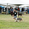 20161120_Greater Sierra Vista Kennel Club_Aussies-295