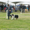 20161120_Greater Sierra Vista Kennel Club_Aussies-50
