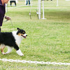 20161120_Greater Sierra Vista Kennel Club_Aussies-87