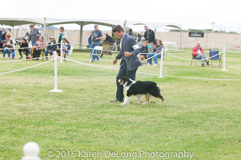20161120_Greater Sierra Vista Kennel Club_Aussies-60