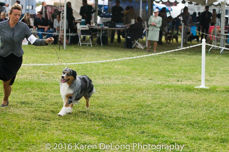 20161120_Greater Sierra Vista Kennel Club_Aussies-127