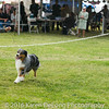 20161120_Greater Sierra Vista Kennel Club_Aussies-127