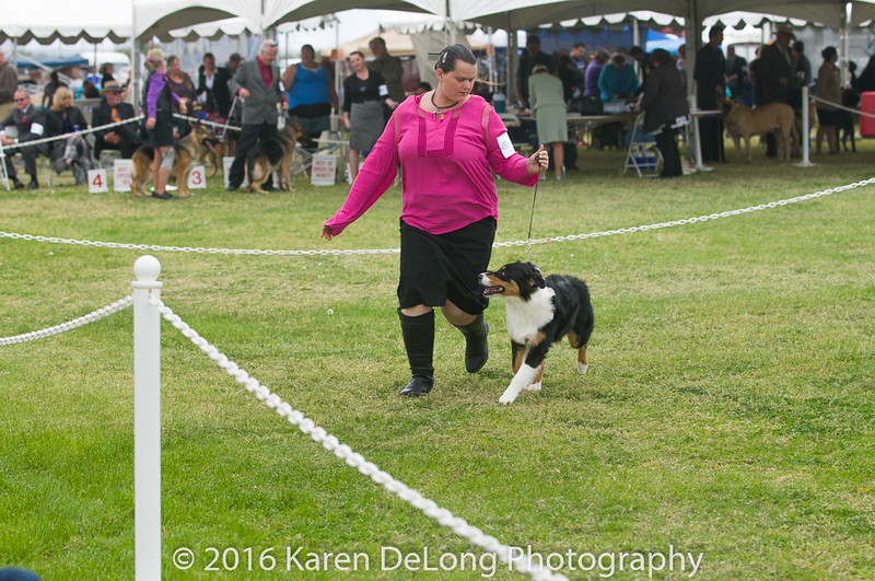 20161120_Greater Sierra Vista Kennel Club_Aussies-24