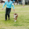 20161120_Greater Sierra Vista Kennel Club_Aussies-238