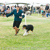 20161120_Greater Sierra Vista Kennel Club_Aussies-92