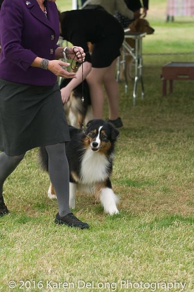 20161120_Greater Sierra Vista Kennel Club_Aussies-254