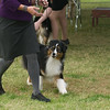 20161120_Greater Sierra Vista Kennel Club_Aussies-254