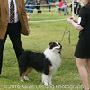 20161120_Greater Sierra Vista Kennel Club_Aussies-107